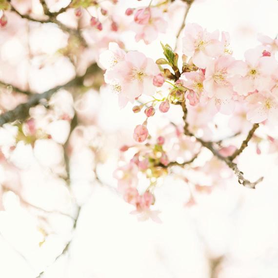 トップ_春イメージ_桜