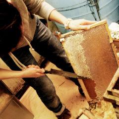 ABOUTページ_養蜂作業を手伝う風景