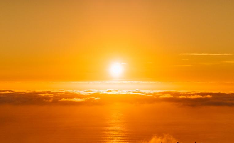 2019,07,23_天然のハチミツは太陽?