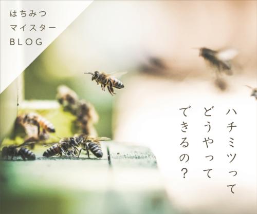 どうやってハチミツ_ブログバナー